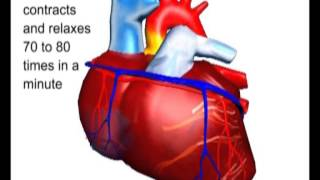 Structure of the Heart -- Why Heart Attack occurs?