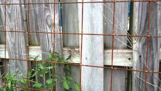 Wire Mesh Trellis, Rusty, For Veggies. Remesh