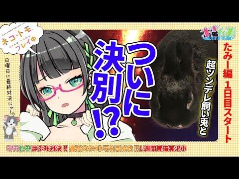 【ゲーム実況】みあたみばぶみ対決!最高のネコトモ育てる【たみー#1】