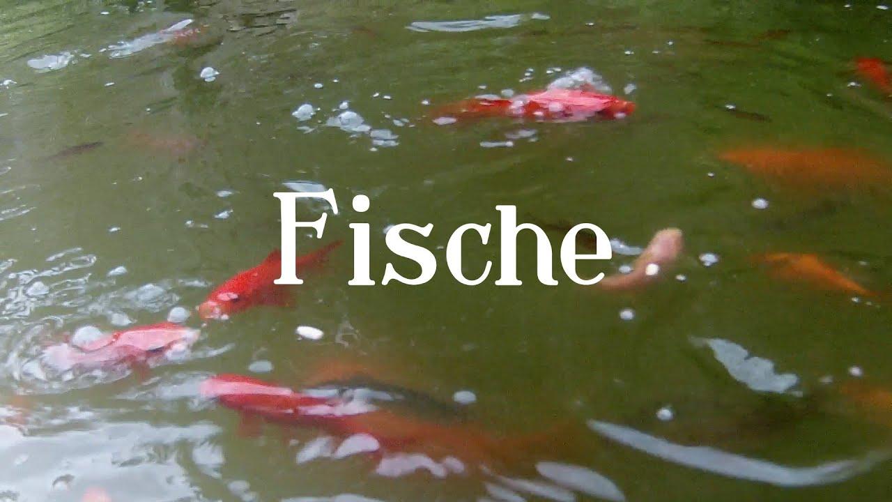 Ein film f r katzen fische video for cats youtube for Aquarium heizung