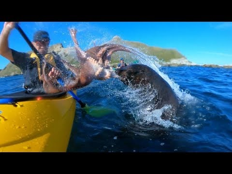 Cindy Collins - Kayaker Smacked With An Octopus