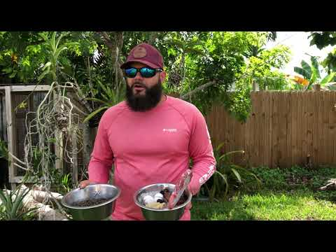 ‼️FEEDING RAW AND KIBBLE TOGETHER? WATCH THIS VIDEO.