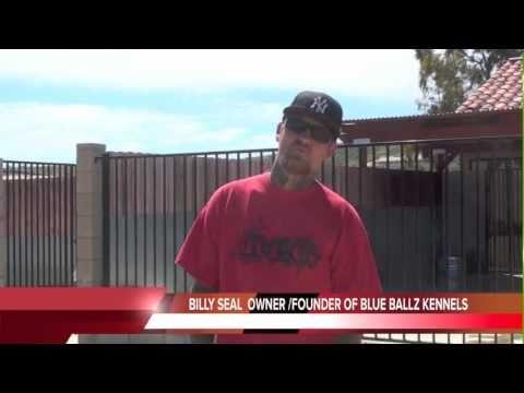 BLUE BALLZ KENNELS