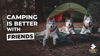 Camping With Dogs + Tips | Husky Squad
