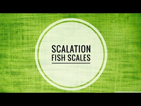 Types Of Scales In Fishes| Scalation| Lagler| Quick Review| Slideshow| Biology Base.