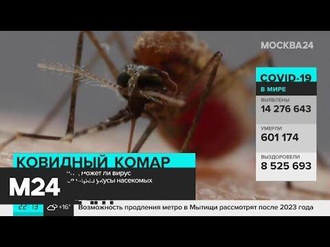 Коронавирус не распространяется через укусы комаров Москва 24