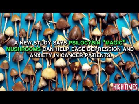 Study: Magic Mushrooms Can Ease Depression In Cancer Patients