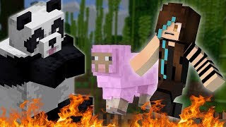 Minecraft but a panda drove me to madness
