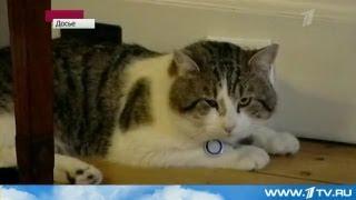 英首相官邸の猫ラリー氏が失職 ロシア第一放送