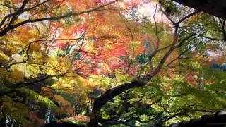日本に昔より伝わる歌。この歌を写真と動画で表現してみました。