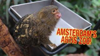Touring Amsterdam's Artis Zoo! - Dāv Kaufman Vlogs