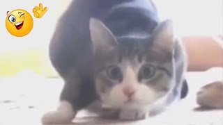 Фу фу фу! Воняет! Кот чихает!(Фу фу фу! Воняет! Кот чихает! Все в курсе, что коты чистюли. Как они вылизывают себе яйца, видели все! ))) А как..., 2014-09-03T07:44:33.000Z)