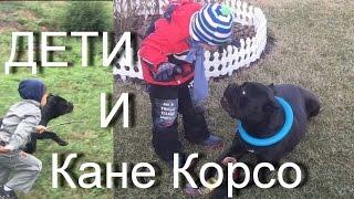 ДЕТИ и собака КАНЕ КОРСО. #КанеКорсоиДети Характер Кане Корсо