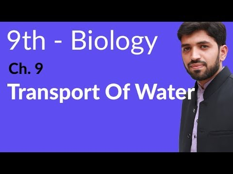 Matric part 1 Biology, Transport of water - Ch 9 Transport - 9th Class Biology