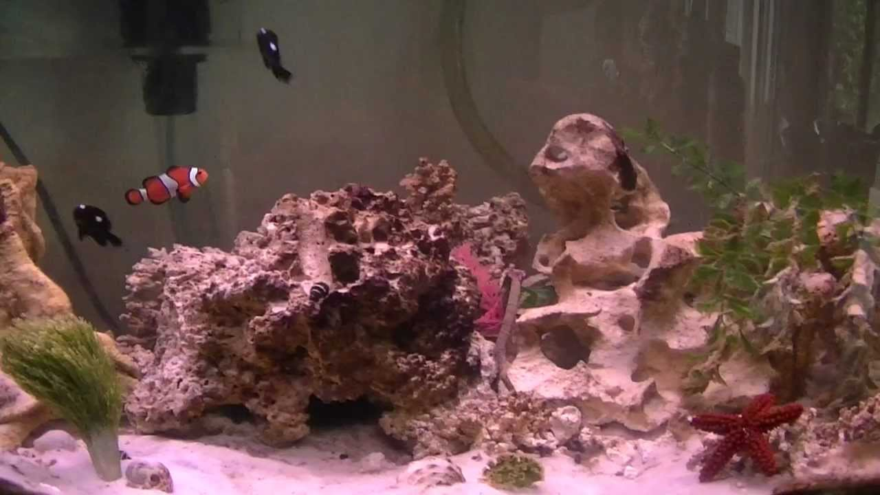 My Saltwater fish tank   YouTube