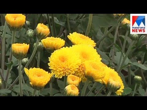 Vegetable farms in Karnataka are turning to flower farming   | Manorama News