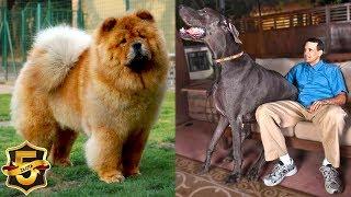 5 największych ras psów na świecie!