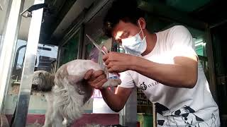 Semi Kalbo done by Groomer Renan at Blue Fin Animal Clinic Taguig. ...