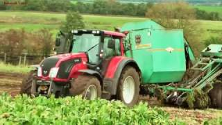 Lifting Fodder Beet - Valtra Action