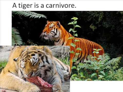 What Animals Eat  Herbivore, Carnivore, Omnivore