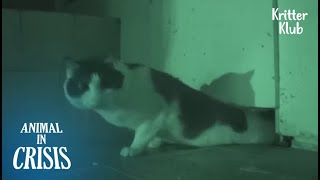 Heartbroken Cat Locks Himself In A Tiny Room For 8 Years | Animal in Crisis EP167