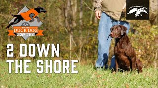 2 Down The Shore Hunting Dog Training technique | DDU Ep.11