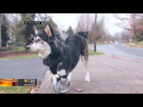 Dog receives prosthetic legs made by 3D printer