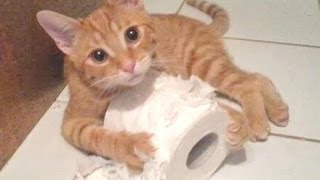 Funny Cats And Dogs Vs Toilet Paper Compilation 2014 [NEW]
