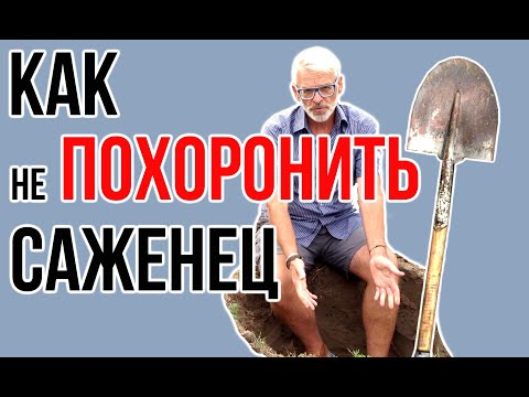 Посадочная яма / Как сажать плодовые деревья / Игорь Билевич