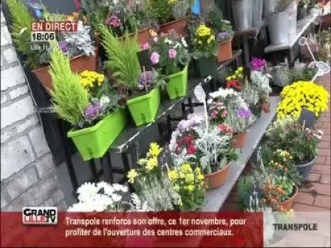 La Toussaint: une période importante pour les fleuristes