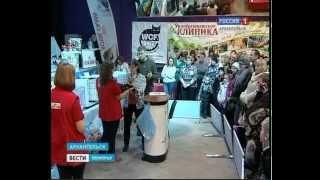 В Архангельске - международная выставка домашних кошек