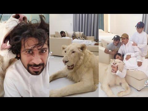TikTok Dubai Humaid Albuqaish With His Pets Compilation EP10