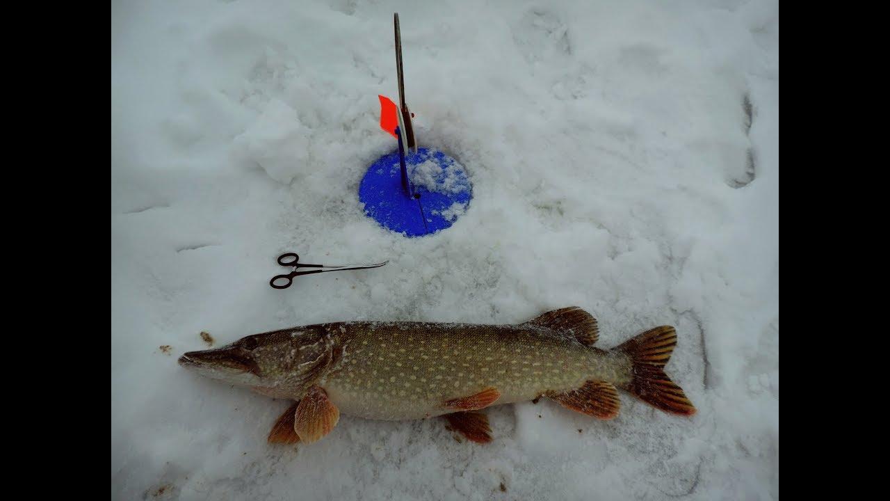Рыбалка в декабре на жерлицы