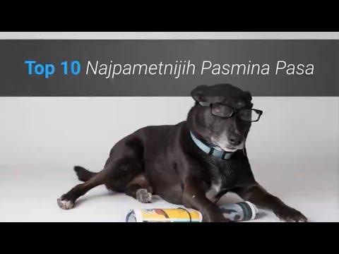 Koji Su Najpametniji Psi Na Svijetu? Top 10 Najpametnijih Pasmina Pasa 🐶