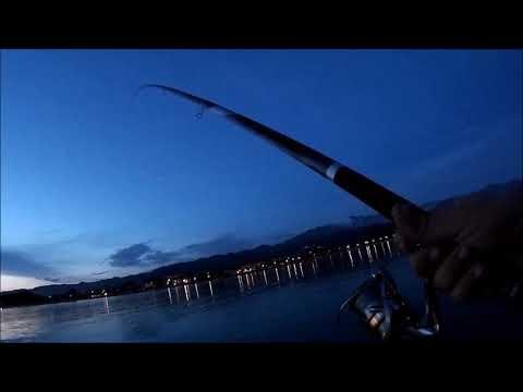 big fish in canna ma    pesca a bologese in foce con spigole al calasole con daiwa amorphous 8