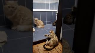 признаки и поведение кошки когда она просит кота