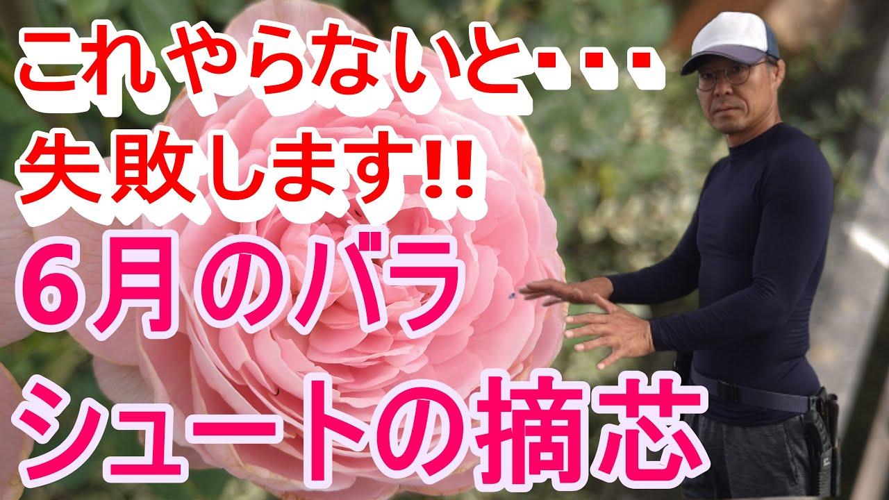 [ガーデニング] 6月のバラのお手入れ〜消毒・剪定〜「プロガーデナーが一年かけてお届けするバラの管理方法」