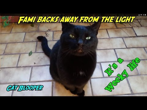 Cat steps away from the light [cat fails blooper]