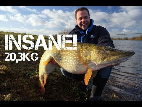 INSANE: last pike of 2017, 20,3kg! (Underwater footage!)