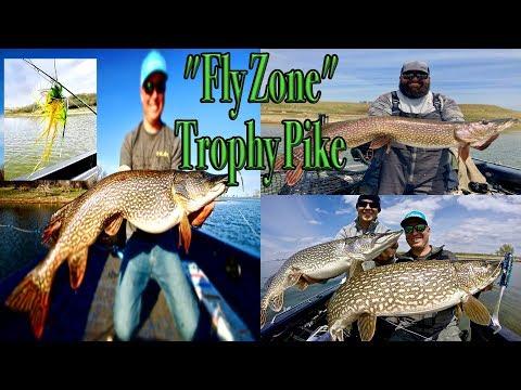 Amazing Drive-To Trophy Pike On-Fly Fishing On Sakakawea North Dakota