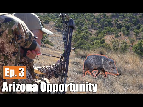 HUNTING JAVELINA WITH A BOW: Arizona Opportunity Hunt (Ep. 3)