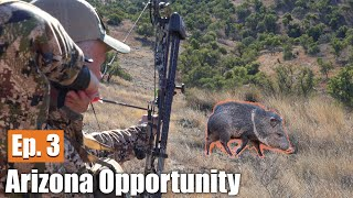 Gambar cover HUNTING JAVELINA WITH A BOW: Arizona Opportunity Hunt (Ep. 3)