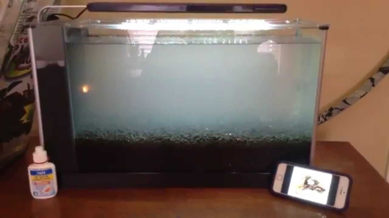 Aquascaping For Beginners Type Of Tank And Substrate Youtube