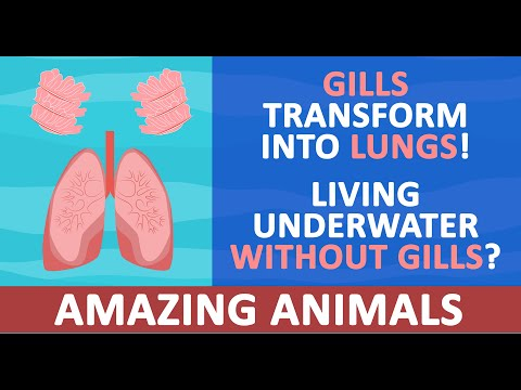 Gills Transforming Into Lungs & Those With Lungs That Live Underwater | Strange Bizarre Animals 4K