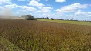 colheita  Bahia  2011