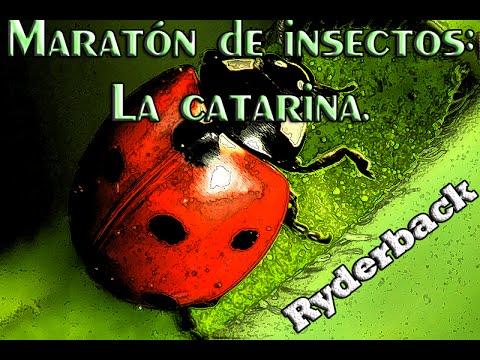 Maratón de insectos: La catarina.
