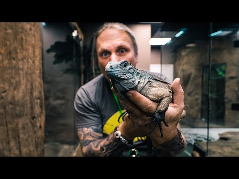 GETTING A BLUE ROCK IGUANA FOR MY REPTILE ZOO!! Build Day #13 | BRIAN BARCZYK