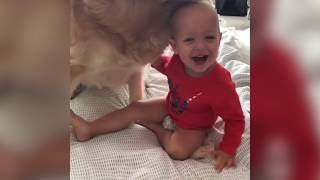 🐶 Funny Babies Playing With Dogs - Awesome Big dogs and kids Compilation 2019