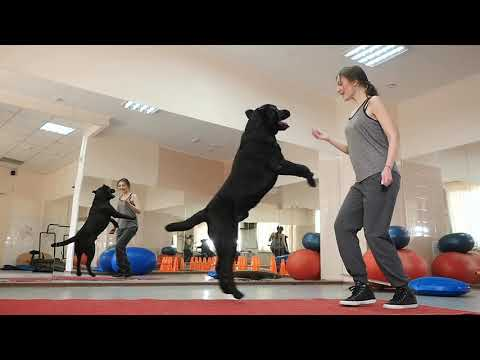 CATCH Your Dream: CATCH Academy - The Premier Dog Trainer School - Become A Dog Trainer!