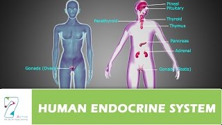 HUMAN ENDOCRINE SYSTEM_PART 01